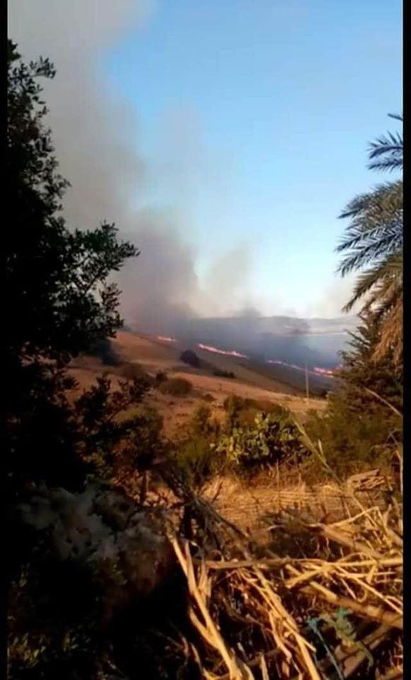 3000 هكتار من الغابات في تونس تتحوّل إلى فحم عند كل صيف