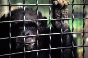 """القضاء اللبناني يتدخل لوضع حدّ لمعاناة """"شارلي"""": حماية الحيوان من أجل الطبيعة"""