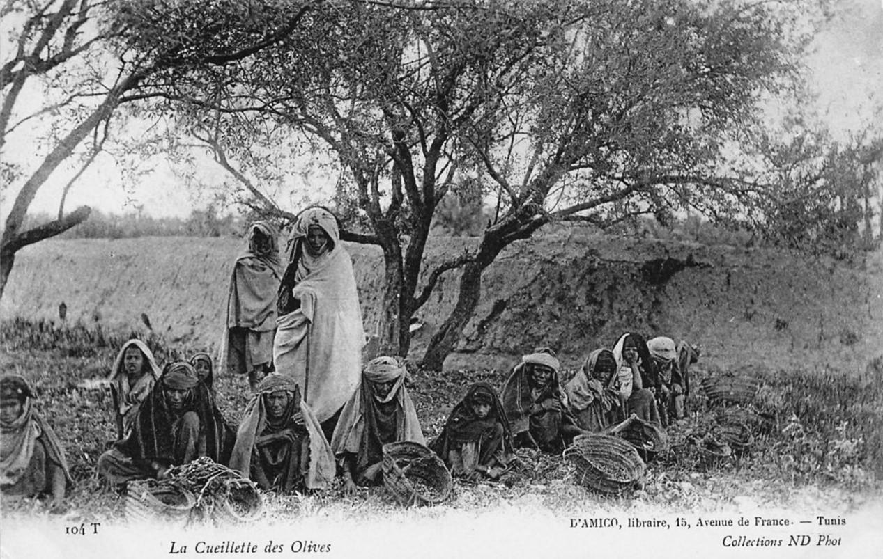 الاقتصاد الاجتماعي والتضامني في تونس: ظاهرة ذات جذور تاريخية واجتماعية عميقة